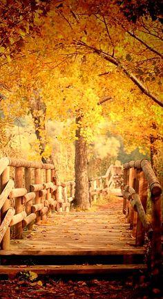 Beautiful #Autumn View