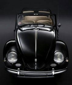 Beautiful Black Bug