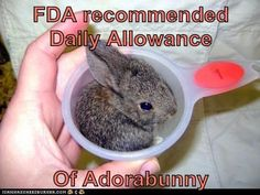 """I don't know if I should Pin this to """"Pharmacy tech"""" or """"bunnies"""""""