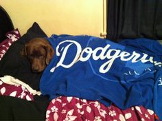 This Dodger Dog is brought to you by @lindsstokes!