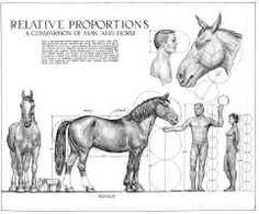 horse anatomy - Google pretraživanje