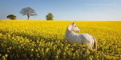 Τα άλογα όπως είναι, με άγρια ομορφιά τους και τον τρομερό χαρακτήρα τους. ΄Η μήπως τα άλογα όπως θα θέλαμε να τα δούμε; Η φωτογράφος Βιμπκ Χας (Wiebk...