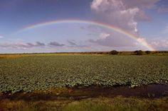 Wildman Wilderness Lodge: Mary River Wetlands, Northern Territory #Australia