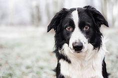 Si può misurare l'intelligenza dei cani? Uno psicologo canadese lo ha fatto e i risultati sono questi...