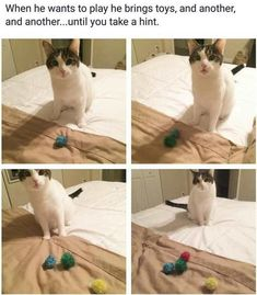 The 20+ Funniest Pics of the Week Cute Funny Animals, Funny Animal Pictures, Funny Cute, Cute Cats, Hilarious, Funniest Animals, Funny Pics, Funny Stuff, Hamsters