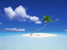 One Palm Island, Tahiti, French Polynesia  タヒチ島の無人島  パームツリー一本だけでもこれほどの存在感! 周囲に海と空しか無いのが贅沢。
