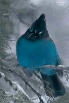 one-and-only-one: blue bird