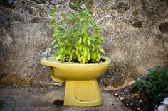 #GardenIdeas, #Plant Who still uses a bidet today ? I think nobody ... so use your old bidet to put plants inside and creates an artistic garden ! :) ++ Found at Tziu Lelle Flickr via Recyclart Flickr Pool !