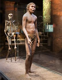 Turkana Boy, 1.5 million years old. H.Ergaster (1.8-1.3 million years old) Probably the first to have a voice.