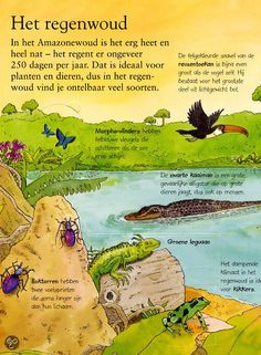 Thema oerwoud / jungle: het regenwoud All About Me Preschool Theme, Learn Dutch, Jungle Safari, Yoga For Kids, Reading Material, What Is Life About, Travel With Kids, Habitats, Mexico