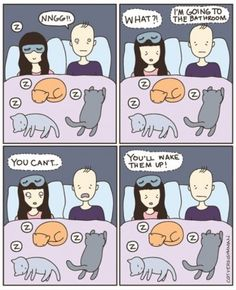 Cats vs Human. I've had to hold it so many times. The things we do for our cats...