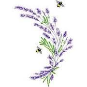 drawing lavender - Google Search