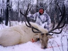 hunting and our wild life Trophy Hunting, Elk Hunting, Hunting Stuff, Rifles, Whitetail Deer Pictures, Amazing Beasts, Rare Albino Animals, Hunting Pictures, Bull Elk