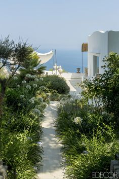 """A similar sense of timelessness also permeates the garden, which includes a grove of orange and lemon trees, as well as a long colonnade leading to a terrace overlooking the sea. """"The garden had been abandoned, but it was still among the most beautiful I'd ever seen,"""" says garden designer Antonella Sartogo. Delicate palette of native plants.  The entrance to the garden is planted with boxwood and agapanthus.   - ELLEDecor.com"""
