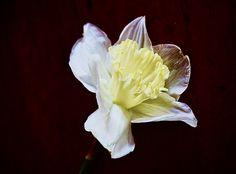 Daffodils, Cabbage, Vegetables, Rose, Artwork, Flowers, Plants, Pink, Work Of Art