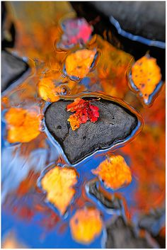 """""""Heart Rock Reflections"""" - Autumn in Grotton State Forest, Vermont.  Photo:  Joseph Rossbach via Flickr"""