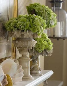 riley - the organic texture green.     /flowers, hydrangeas. home accessories plants indoors