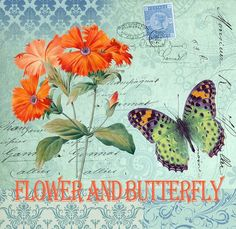 Flower and Butterfly.