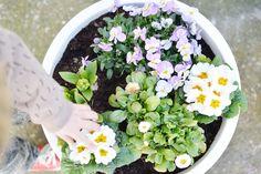 Flowers on the blog. Madeliefjes, Primula, viooltjes en hyacinten.