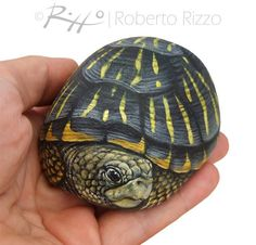 Unique Hand Painted Tortoise A Wonderful Box Earth Turtle Painted with Acrylic on a Perfectly Shaped Sea Rock is part of Turtle painting I Painted this Rock Tortoise on a Wonderful Shaped Natural - Turtle Painting, Pebble Painting, Pebble Art, Stone Painting, Painted Rock Animals, Hand Painted Rocks, Turtle Painted Rocks, Painted Stones, Painting Animals On Rocks