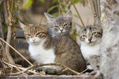 Beat the heat, spay/neuter now: Tips for preventing 'kitten season'
