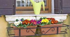 Plantas de invierno para el balcón