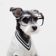 Image result for tired doggies dressed like teacher