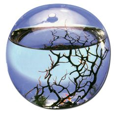 An eco-sphere. always wanted one of these.