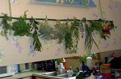Flor seca: métodos de secado:.