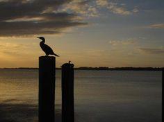 Lake Dora - Mount Dora - Reviews of Lake Dora - TripAdvisor