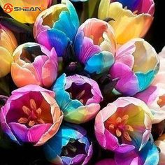 Bonsai Tulip Seeds Rare Rainbow Tulip Flower Seeds Potted Plants 100 Particles / lot
