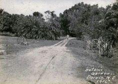 Botanic Gardens, now Gardens Road Darwin 1915 Darwin, Botanical Gardens, Paths, Country Roads, Australia, History, Walking, Historia, Walks