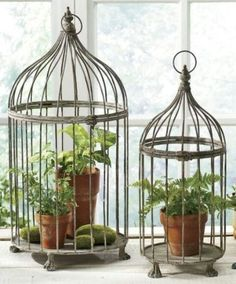 Bird Cage Planters Are A Nice Bohemian Vibe To Add Your Decor