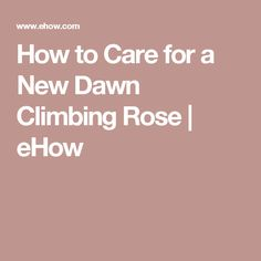 How to Care for a New Dawn Climbing Rose | eHow