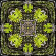 NZ native emerald green tree ferns, in square mandala design for textiles, fabrics and more.