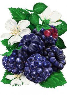 Blackberries, Illustration by Inorama Fruit Illustration, Food Illustrations, Botanical Illustration, Fruit Painting, China Painting, Botanical Drawings, Botanical Prints, Color Pencil Art, Food Drawing