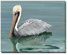 F083003534: Brown Pelican Wrapped Canvas Art by Rollie Brandt