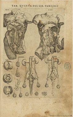 Anatomy Study, Anatomy Art, Human Anatomy, Medical Drawings, Medical Art, Body Reference, Art Reference, The Modern Prometheus, Anatomy Images
