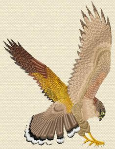 Free Machine Embroidery Designs Patterns | Machine Embroidery Design Falcon