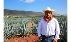 Patrón tequila is made and manufactured at its hacienda in Jalisco, Mexico. Pictured here: A jimador.