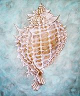Seashell, Helena Papatsiamanis