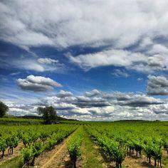 Vignoble - Cucuron - France