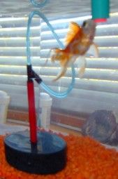 1000 images about science fair ideas on pinterest for Fishing science fair projects