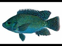Fish - Dream meaning. Book of Dream Interpretations Online
