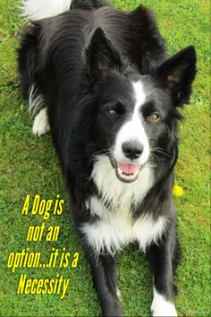 A Dog is not an option...it is a Necessity says Asha the border collie...