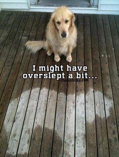 Silly doggie!