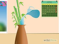 Take Care of Bamboo Plants in Water Step 5.jpg