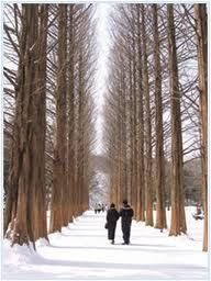 Official Site of Korea Tourism Org. Seoul Itinerary, Chuncheon, Korea Tourism, South Korea, World, Trees, Outdoor, Organization, Explore
