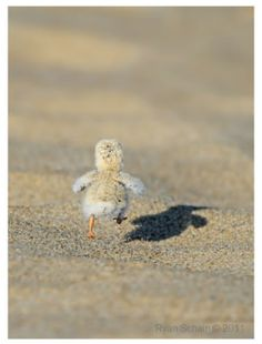 Every time i see this i can't help but smile :D run little guy (: