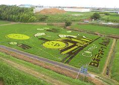 Japanese Rice Field Art
